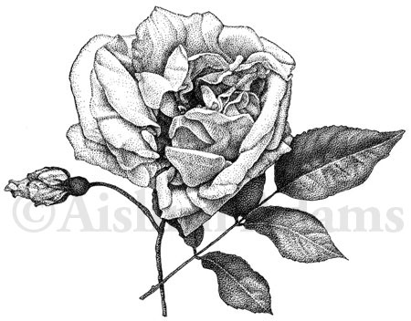whats in a name that which we call a rose